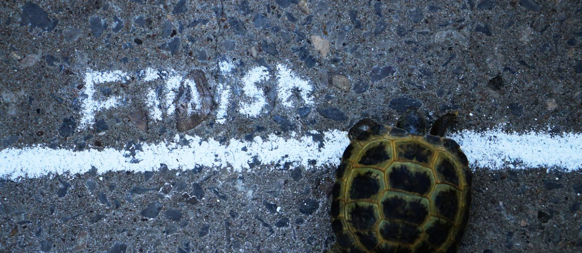 turtle crossing a finish line
